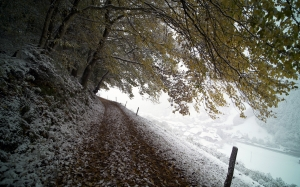 winter, nature, forest, mountain, snow, november, december, path, foliage