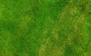 abstract, backdrop, background, field, grass, green, lawn, pattern, plant, texture