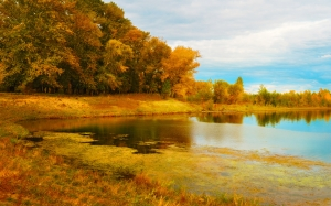 beach, river, autumn, forest, nature, landscape