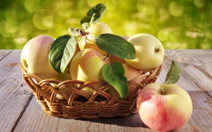 apples, harvest, harvesting basket, still life, autumn, nature, food, fruit, vegetarian