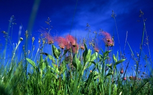 nature, prairie, grass, sky, flowers