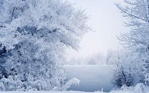 snow, winter, landscape, branches, grass, fog, river, water, frost