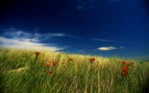 nature, prairie, grass, sky, flowers, lily