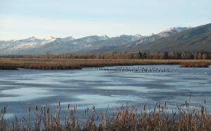 nature, waterfowl, wetland, winter, pond, mountains, prairie