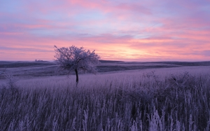 nature, north dakota, tree, frosty, morning, sunrise, meadow, grass