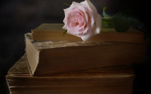 book, still life, rose, flower