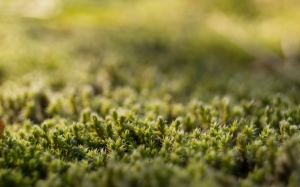 green, moss, forest, nature, macro