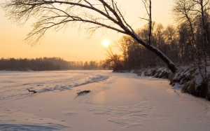 sunset, winter, snow, nature, forest, sun, december, evening, trees, frost