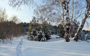 snow, woods, winter, drifts, daytime