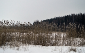 shore, winter, reeds, landscape, snow, february