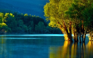 water, lake, reflection, trees, nature