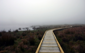 boardwalk, wetland, swamp, lake, bog, mire, recreation, fog, mist, cloud, haze, reeds