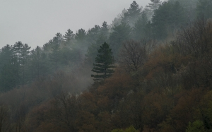 forest, fog, autumn, nature, mountain, trees
