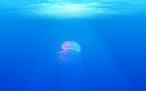underwater, jellyfish, sea, ocean, water