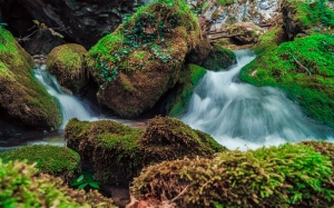 water, moss, river, rocks
