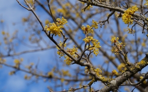 inflorescence, branches, spring