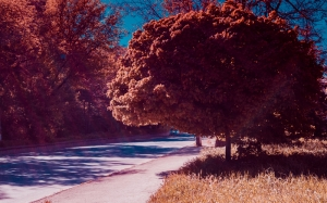 nature, autumn, trees, foliage, street