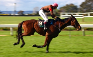 sports, horse, racehorse, animal, track, jockey, rider