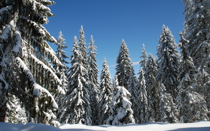 winter, snow, forest, blue sky, pamporovo, landscape, wilderness, scenery, natural, wild, outdoor, environment, scenic, land, nature