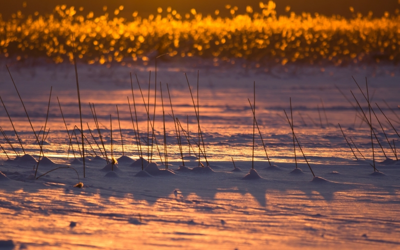 finland, winter, snow, ice, reeds, lake, evening, sunset, nature