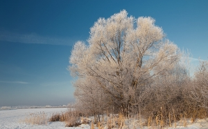 winter, nature, snow, cold, field, trees, landscape