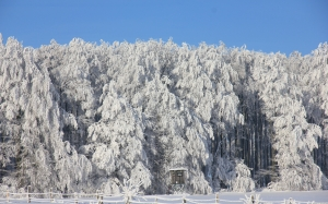 winter, snow, ice, forest, trees, white, teutoburg forest, firs, fence, perch