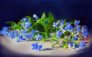 Spring, May, forget-me, garden, flora, flowers, nature