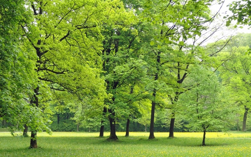 nature, trees, woods, landscape, park, countryside, green