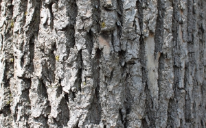 textures, tree, bark, trunk