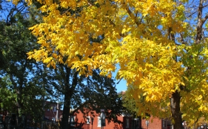 Autumn, fall, seasons, foliage, leaf, leaves, tree, street, color