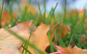 Autumn, fall, seasons, foliage, leaf, leaves, grass, color