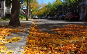 Autumn, fall, seasons, foliage, leaf, leaves, trees, street, color
