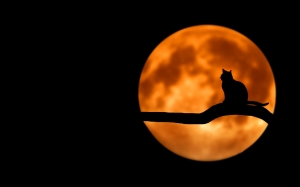cat, night, moon, branch, tree, animals, nature