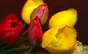 Spring, beauty, May, mood, positive, tulips, flora, flowers