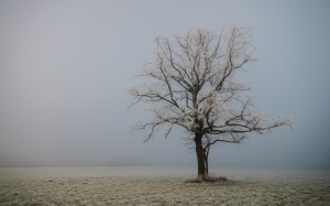 cold, fog, morning, lonely tree, Carinthia, autumn, winter, frost