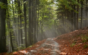 path, autumn, trees, forest, road, woods, fall, foliage