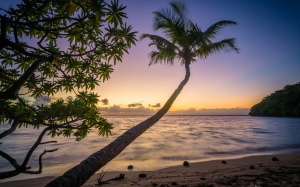 beach, palm, trees, ocean, sea, evening, sunset, paradise, tropical, sand, water, waves, splashing, breakwater, coconuts, peaceful, vacation, holiday, exotic, coast, shore,
