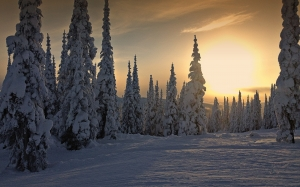 winter, sunset, weather, snow, skihill, trees, landscape, scenery, romantic, beautiful, british columbia, canada, sun peaks, sport, alpine, nature, sky, clouds, winter magic, cold, frosty