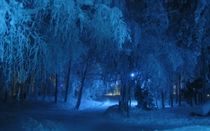 winter, night, blue, shade, trees, snow covered, cold, snowy, tree, covered, lamp