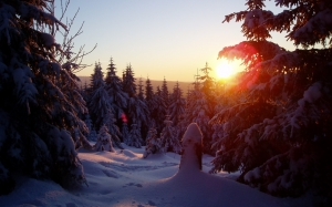 winter sun, wintry, cold