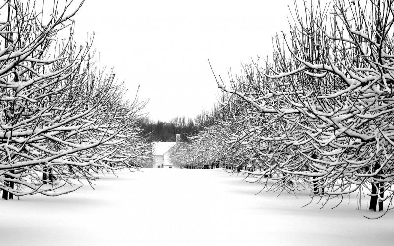christmas, cold, farm, forest, frost, holidays, season, snow, winter, woods