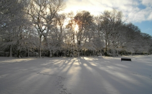 trees, ice, snow, scenic, sun, winter, tree, light and sun