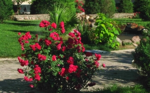 city, summer, nature, plants, roses, country, Tashkent, Uzbekistan, flora, flowers