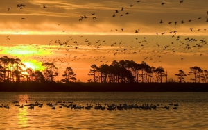 osunset, wildlife, refuge, birds, water, silhouettes, reflections, dusk, sky, tranquil, outdors, scene, evening, landscape, chincoteague, wildlife refuge, usa
