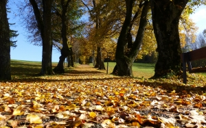 autumn, leaves, trees, colorful, park, nature