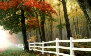 morning, autumn, fall, forest, fence, landscape, rural, country, trees