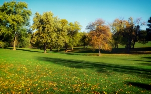 omaha, nebraska, golf course, sports, fall, autumn, fallen leaves, nature, trees, rural