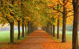 autumn, leaves, trees, park, nature, landscape, fall