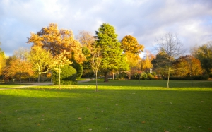 trees, Sir Harold Hillier Gardens, Romsey, Hampshire, England, autumn, fall, park, grass, nature