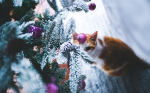 new year, christmas, holidays, xmas, christmas tree, cat